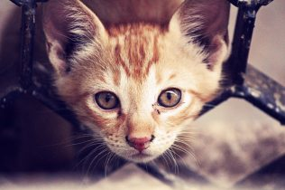 adorable-animal-cat-93690