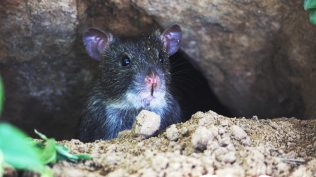 animal-animal-photography-mouse-95399
