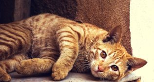 animal-cat-cc0-22346