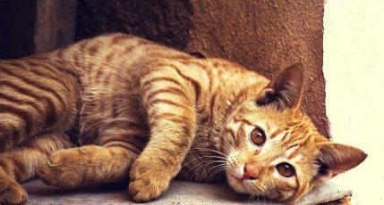 animal-cat-cc0-22346