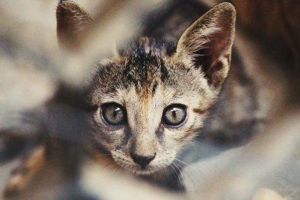 animal-cat-feline-93689