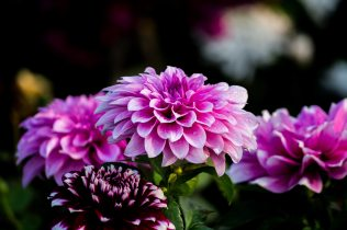 beautiful-beautiful-flowers-blooming-910645