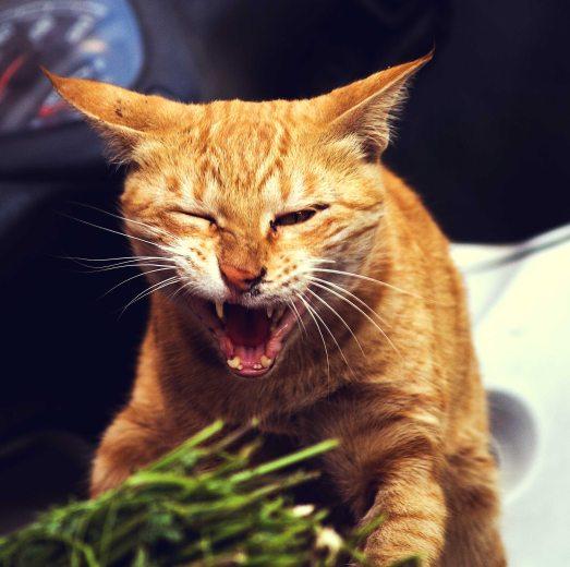 cat-cats-kitten-22344
